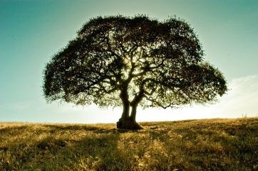 cypresscreek